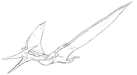 Pteranodon Coloring Pages pteranodon coloring page coloring pages