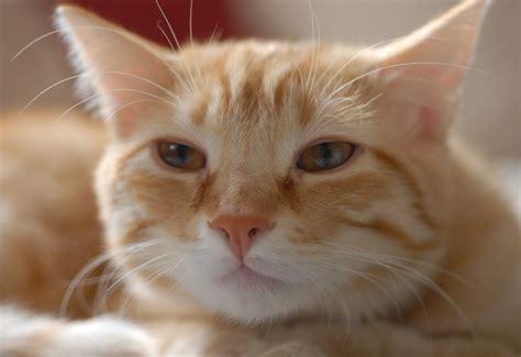 how to give a a pill how to give your or cat a pill