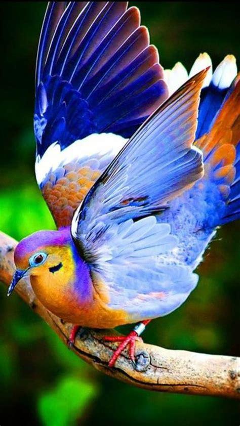 beautiful birds phots best 25 colorful birds ideas on pretty birds beautiful birds and photos of birds