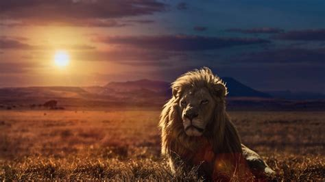 wallpaper hd of lion lion hd wallpapers lion hd pictures free download hd