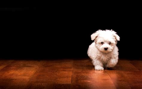 fluffy names names puppy hd white fluffy puppy names hd beautiful cats wallpaper image animal