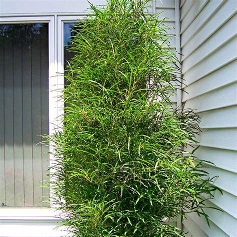 Sträucher Als Sichtschutz Zum Nachbarn 4082 by Baum Als Sichtschutz Nachbar F Llt Einen Baum Brauche