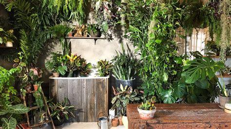 houseplant    workshop plant styling  easy