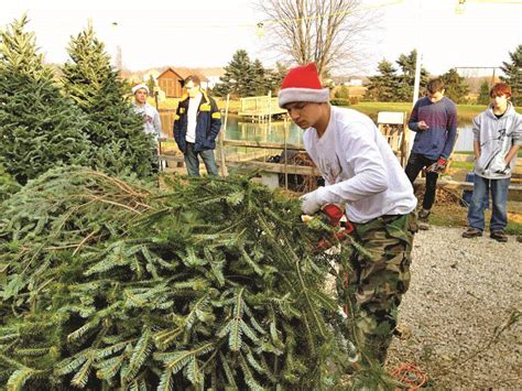 medina christmas tree farms country folks grower