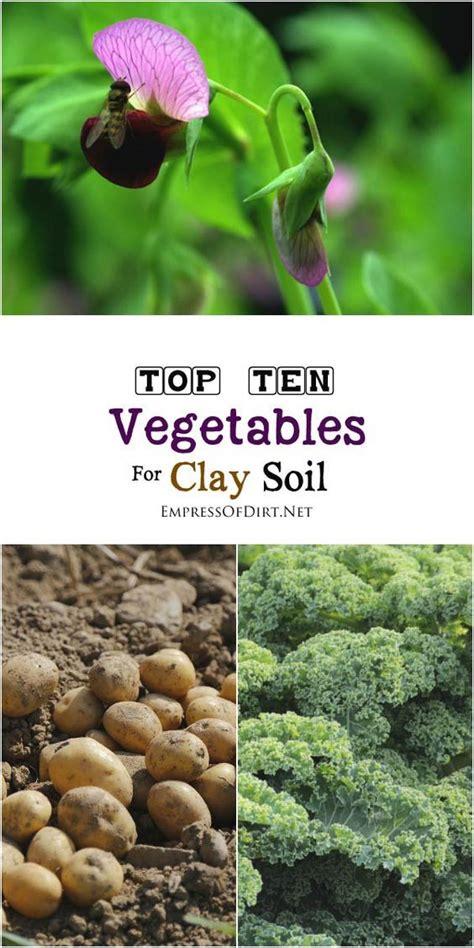 vegetable garden clay soil best 25 clay soil ideas on amending clay soil