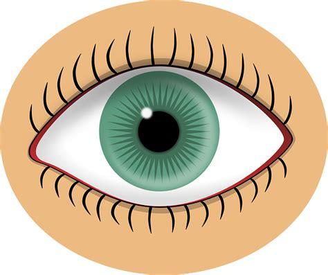 imagenes ojos gratis vector gratis ojo verde alumno humana imagen gratis