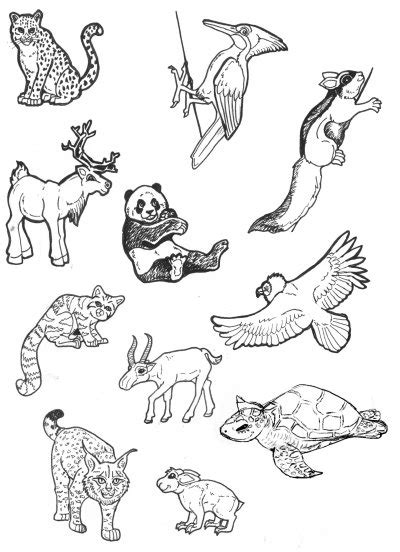 coloring pages endangered animals drawn animal endangered pencil and in color drawn animal