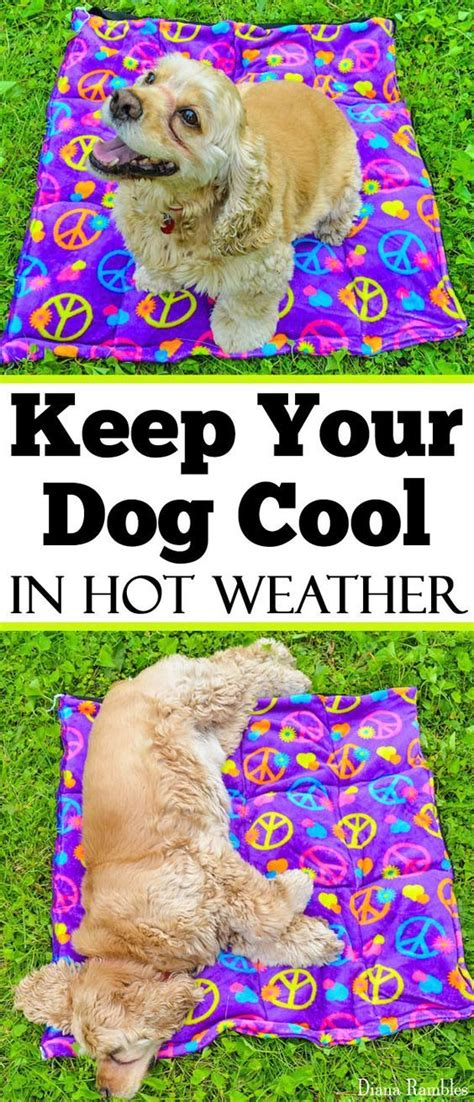 best dog house for hot weather 25 best ideas about cool dog houses on pinterest unique