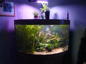 welche beleuchtung aquarium aquarium einrichten aquarium gestaltung und zubeh 246 r
