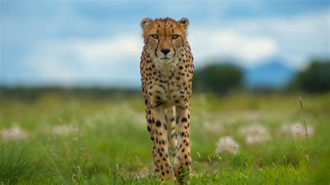 pictures of animals nature animals with cameras episode 2 cities pbs