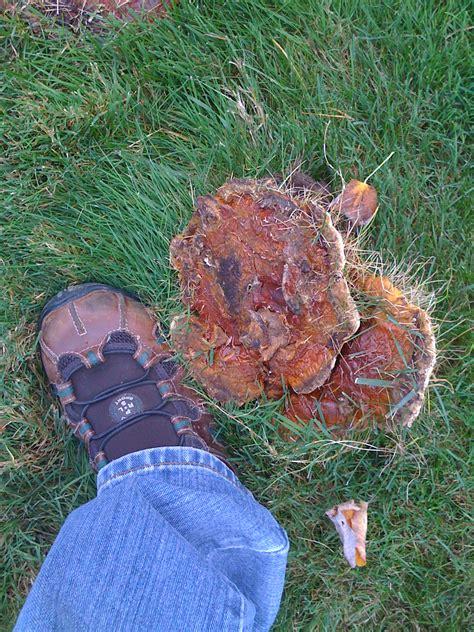 mushrooms in my backyard goatse in my yard ars technica openforum