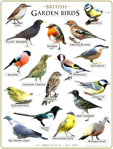 Exceptional Garden State Bullies #1: Garden-birds-identification-garden-bird-poster-on-twitter-checked-my-garden-birds-poster-and-there-garden-birds-garden-bird.jpg