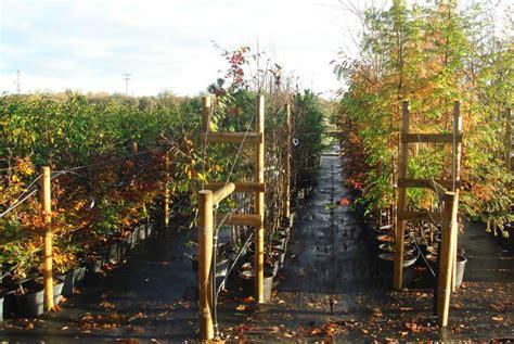 trees oxfordshire trees at wholesale nursery in watlington oxfordshire babylon