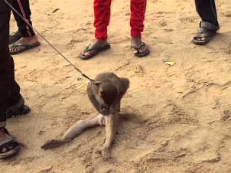 Dancing monkey at Juhu Chaupati Mumbai - YouTube