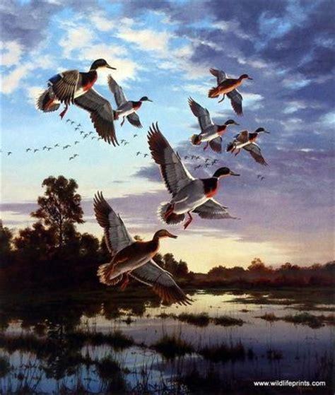 david maass evening flight  mallards | wildlifeprints.com