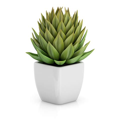 plants for small pots small plant white pot 3d model