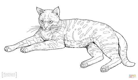 coloring pages of realistic cats black footed cat coloring page free printable coloring pages