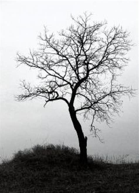 imagenes de arboles invierno 1 193 rbol de invierno descargar fotos gratis