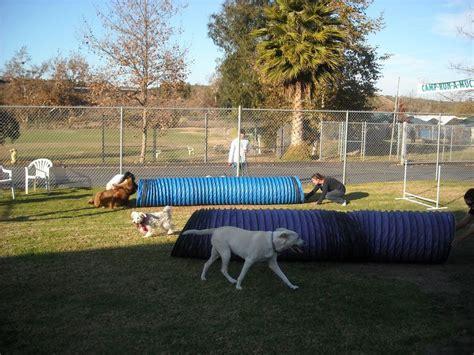 backyard dog agility course 17 best dieren honden agility images on pinterest