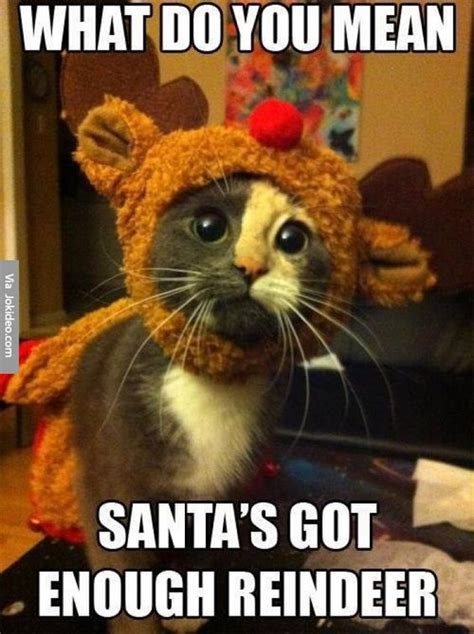 Best Cat Memes - top 30 funny cat memes quotes words sayings