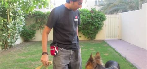 how to your to not need a leash how to teach your leash walking 171 dogs