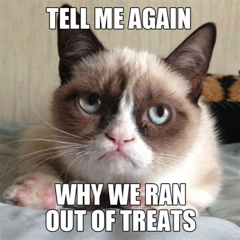 Grumpy Face Meme - angry cat quotes quotesgram