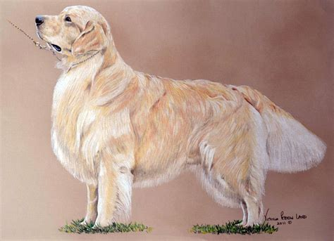 show golden retriever show golden retriever pet portraits by peterson laird