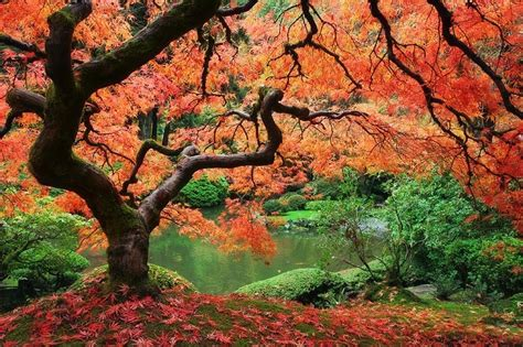 beautiful trees just cool pics the most beautiful trees ever
