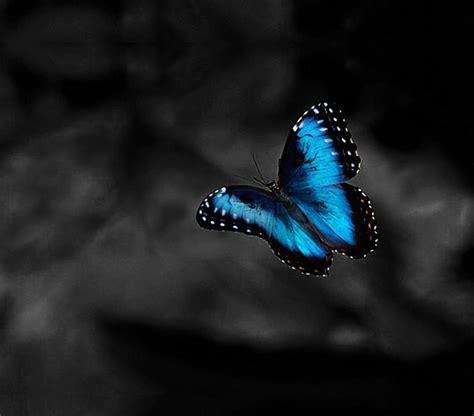 Butterfly Dreams by Blue Butterfly