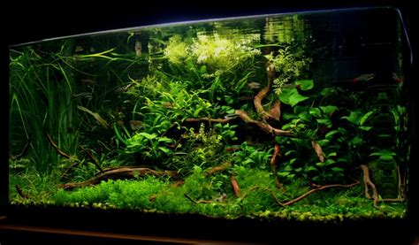 aquascaping world aquascaping world competition gallery mystical