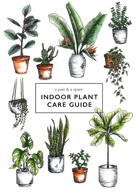 herb care chart 25 best ideas about houseplant on pinterest plants