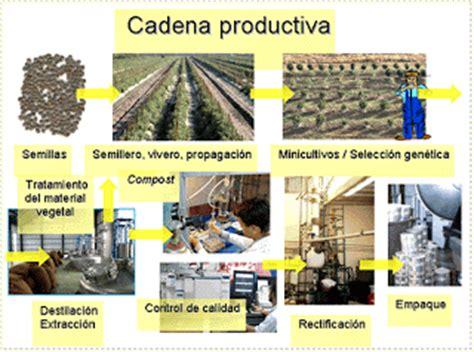 cadena productiva agroindustrial crear y emprender cadena productiva