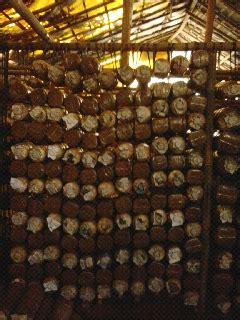 Asli Murah Tali Jemuran 3 M Meter Gantungan Hanger Praktis jamur perwira rak baglog dari tali rafia
