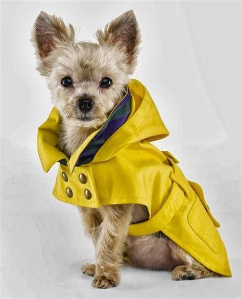 Jo In Pet Transfiguration Cap L 22 chiens habill 233 s beaucoup trop cutes et styl 233 s