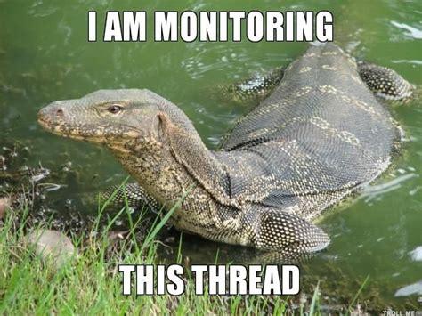 Lizard Meme - lizard meme things for my wall pinterest