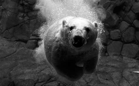 mejores imagenes a blanco y negro 61 fotograf 237 as en blanco y negro
