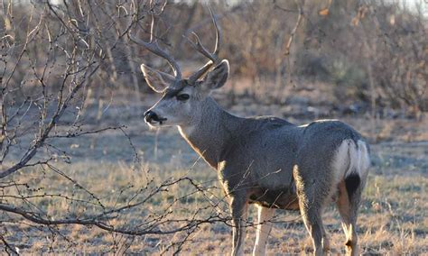 boating requirements in texas mule deer texas parks wildlife department
