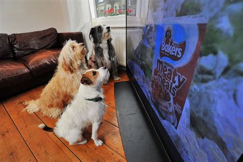 do dogs tv why do dogs and react to tv
