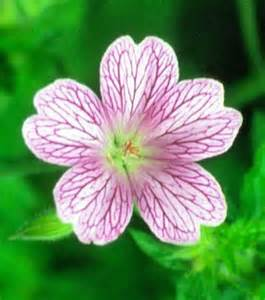 12 top midwest perennial flowers
