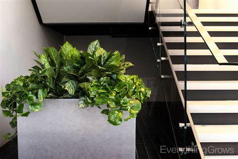 indoor landscaping interior landscaping by everything grows