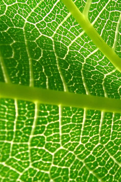 wallpaper for iphone 5 plant plant leaf iphone wallpaper ipod wallpaper hd free