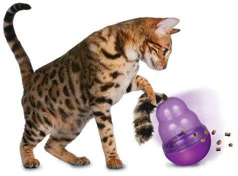 cat or kong cat wobbler review