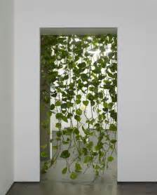 Curtains With Trees On Them The Differences Between Golden Pothos And Heartleaf Philodendron The Plant Kitchens And Entrance