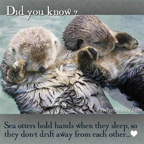 Otter Love Meme - funny animal memes part 5