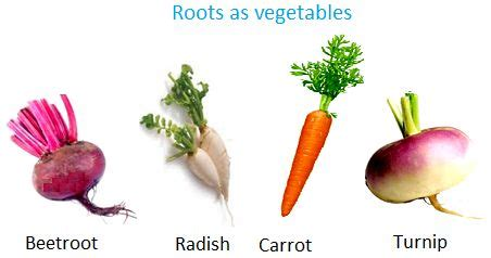 list of edible root roots as vegetables info page on different edible parts of the plant including