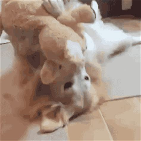 funny animal gifs part 222 (10 gifs) | amazing creatures