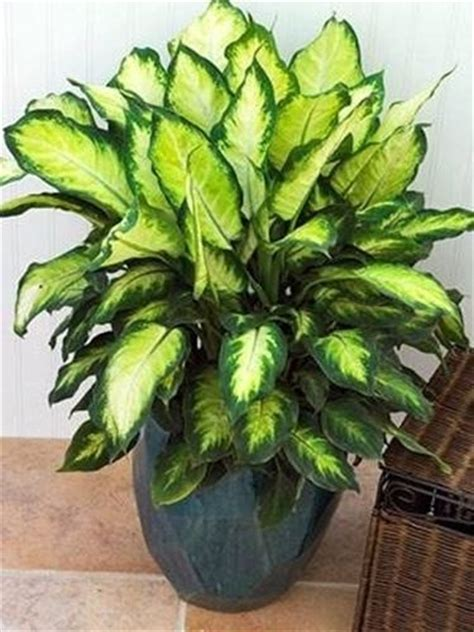 no sun plants indoor plants no sun 28 images plants that grow
