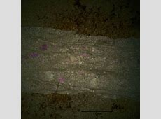 Characterization of CdTe Thin Films for Photovoltaic ... Imagej Texture