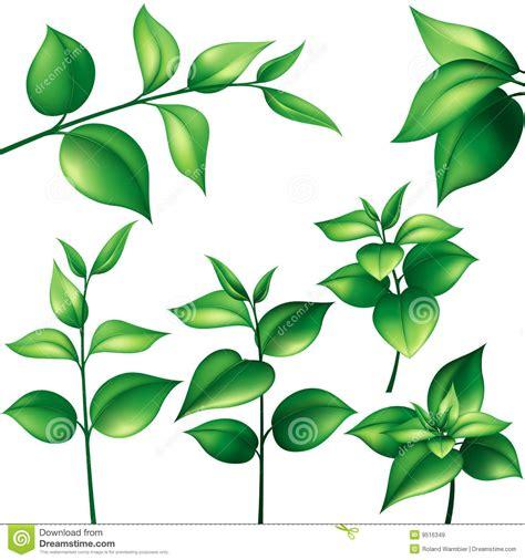 imagenes de hojas otoñales jogo das folhas verdes ilustra 231 227 o do vetor imagem de