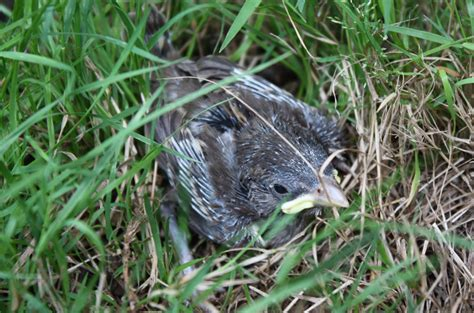 when to help a baby bird and when to leave it alone